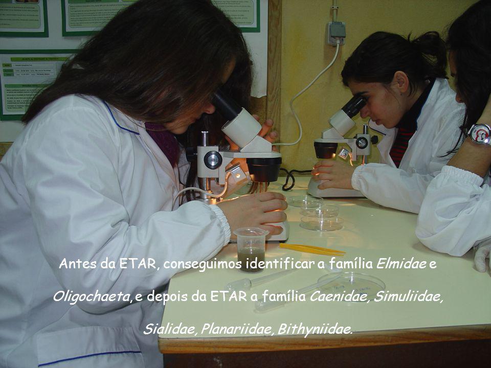 Antes da ETAR, conseguimos identificar a família Elmidae e Oligochaeta, e depois da ETAR a família Caenidae, Simuliidae, Sialidae, Planariidae, Bithyniidae.