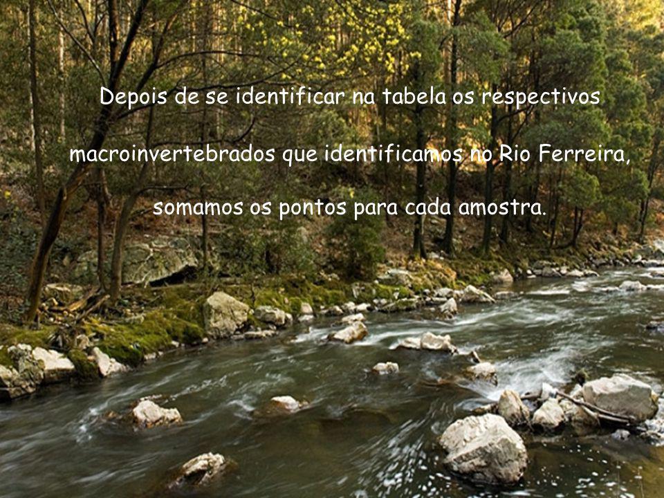 Depois de se identificar na tabela os respectivos macroinvertebrados que identificamos no Rio Ferreira, somamos os pontos para cada amostra.