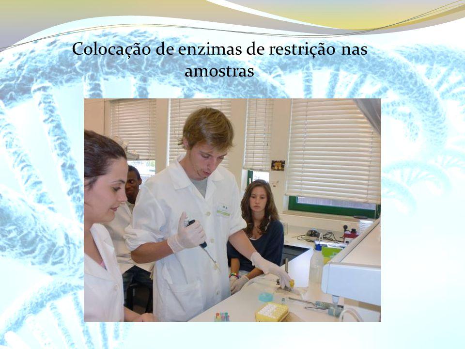 Colocação de enzimas de restrição nas amostras