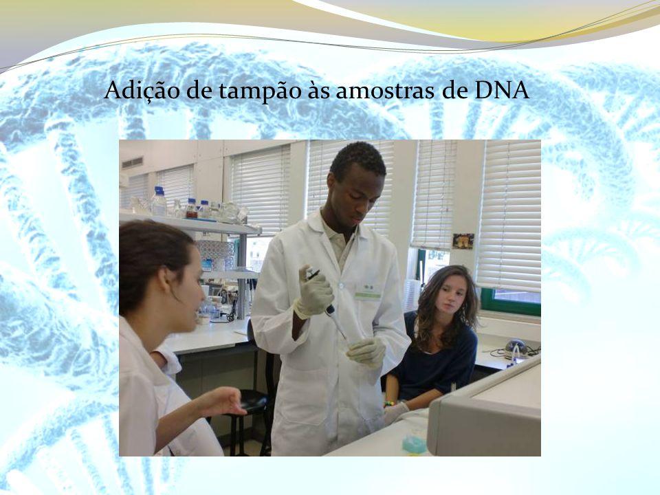 Adição de tampão às amostras de DNA