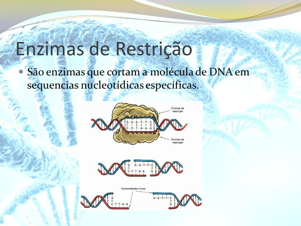 Enzimas de Restrição São enzimas que cortam a molécula de DNA em sequencias nucleotídicas específicas.