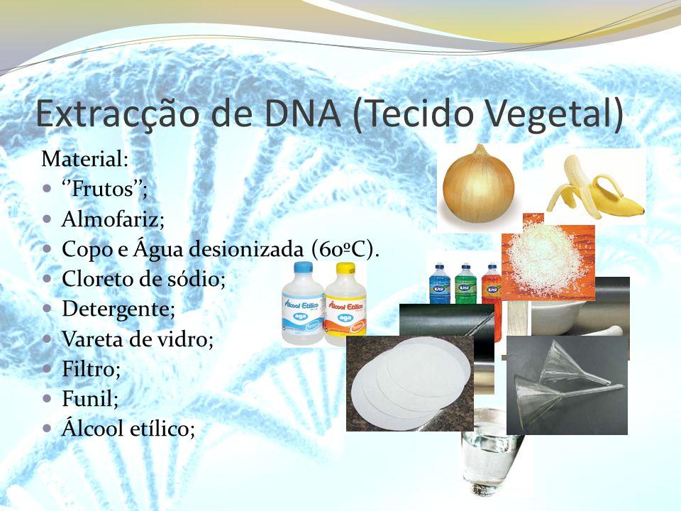 Extracção de DNA (Tecido Vegetal)