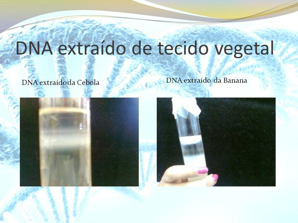 DNA extraído de tecido vegetal