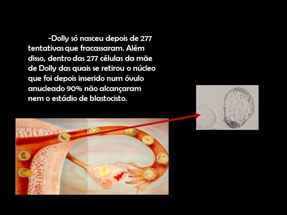 -Dolly só nasceu depois de 277 tentativas que fracassaram