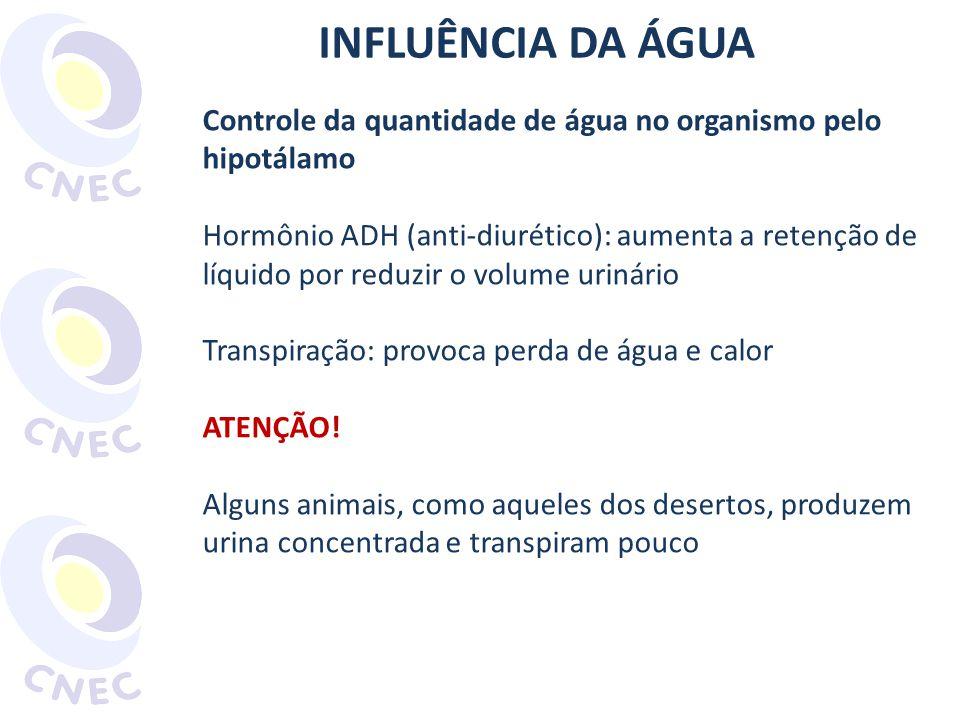 INFLUÊNCIA DA ÁGUA Controle da quantidade de água no organismo pelo hipotálamo.