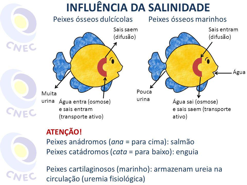 INFLUÊNCIA DA SALINIDADE