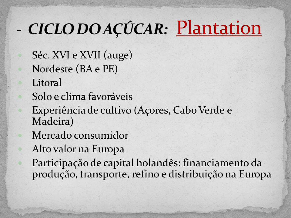 - CICLO DO AÇÚCAR: Plantation