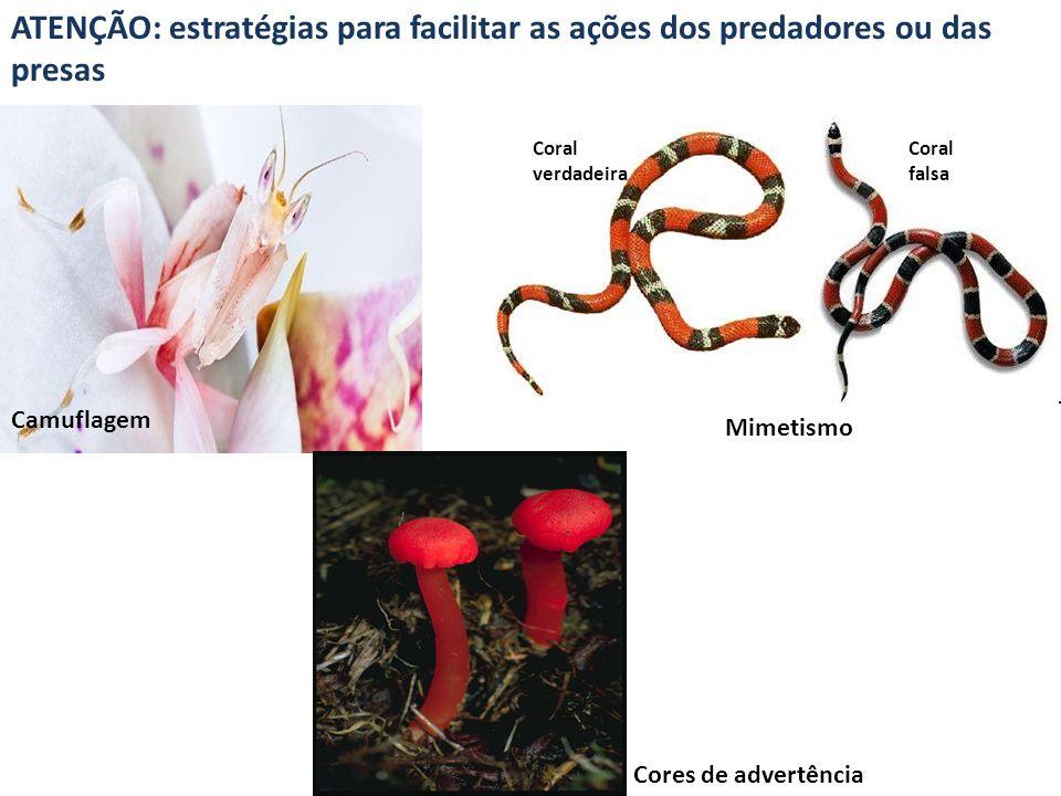 ATENÇÃO: estratégias para facilitar as ações dos predadores ou das presas