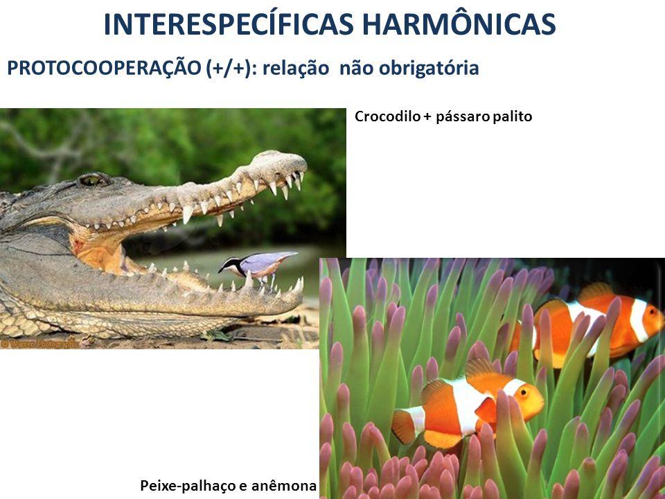 INTERESPECÍFICAS HARMÔNICAS