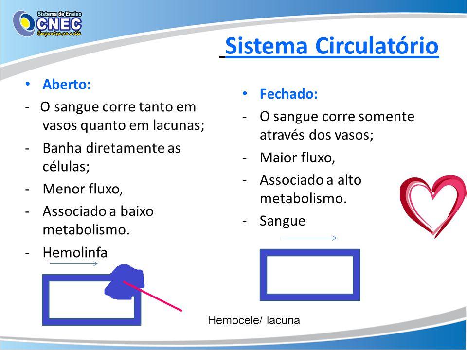 Sistema Circulatório Aberto:
