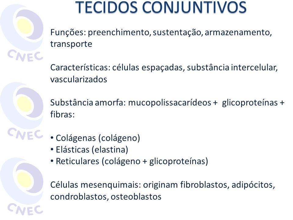 TECIDOS CONJUNTIVOS Funções: preenchimento, sustentação, armazenamento, transporte.