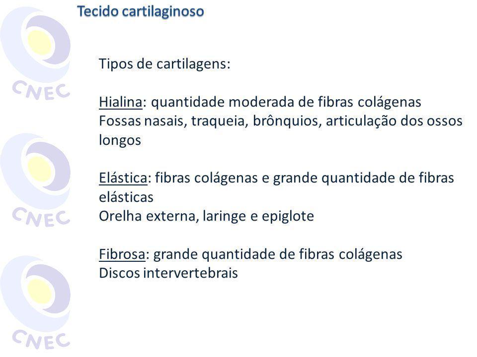 Tecido cartilaginoso Tipos de cartilagens: Hialina: quantidade moderada de fibras colágenas.
