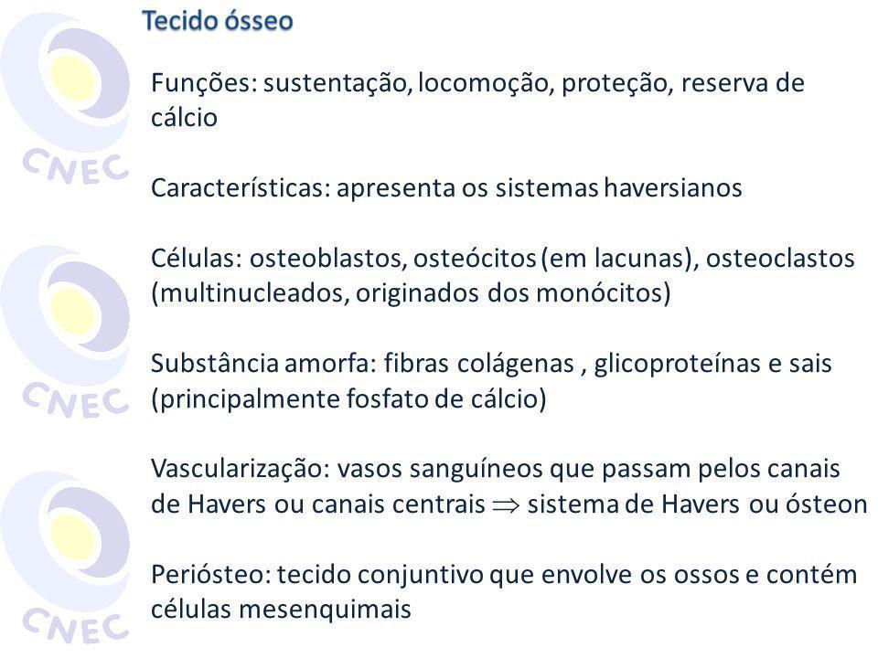 Tecido ósseo Funções: sustentação, locomoção, proteção, reserva de cálcio. Características: apresenta os sistemas haversianos.