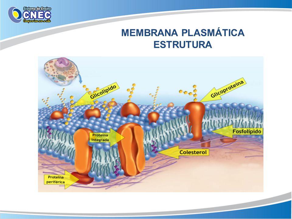 MEMBRANA PLASMÁTICA ESTRUTURA