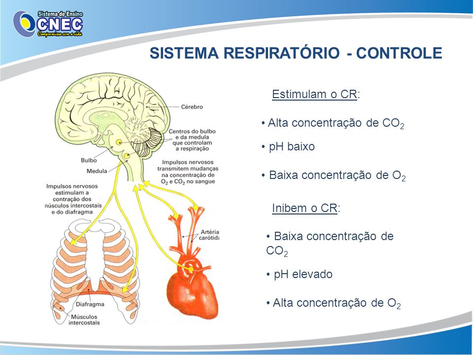 SISTEMA RESPIRATÓRIO - CONTROLE