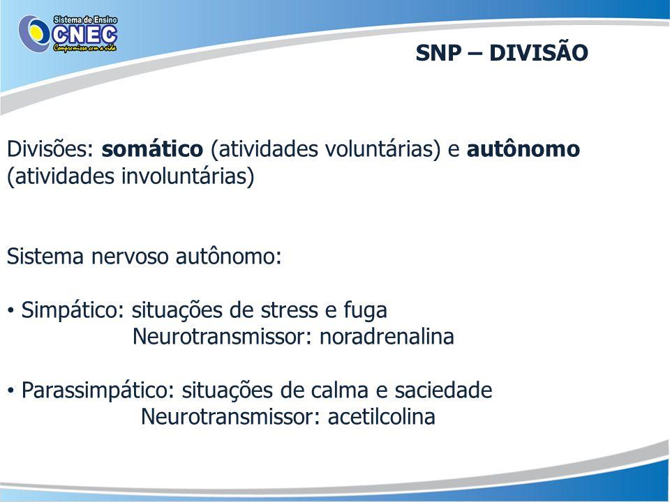 SNP – DIVISÃO Divisões: somático (atividades voluntárias) e autônomo (atividades involuntárias) Sistema nervoso autônomo: