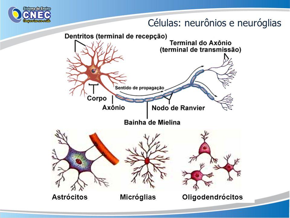 Células: neurônios e neuróglias