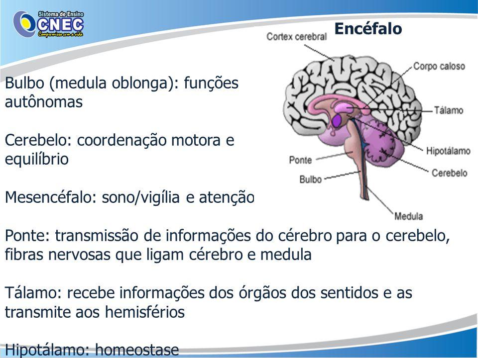 Encéfalo Bulbo (medula oblonga): funções. autônomas. Cerebelo: coordenação motora e. equilíbrio.