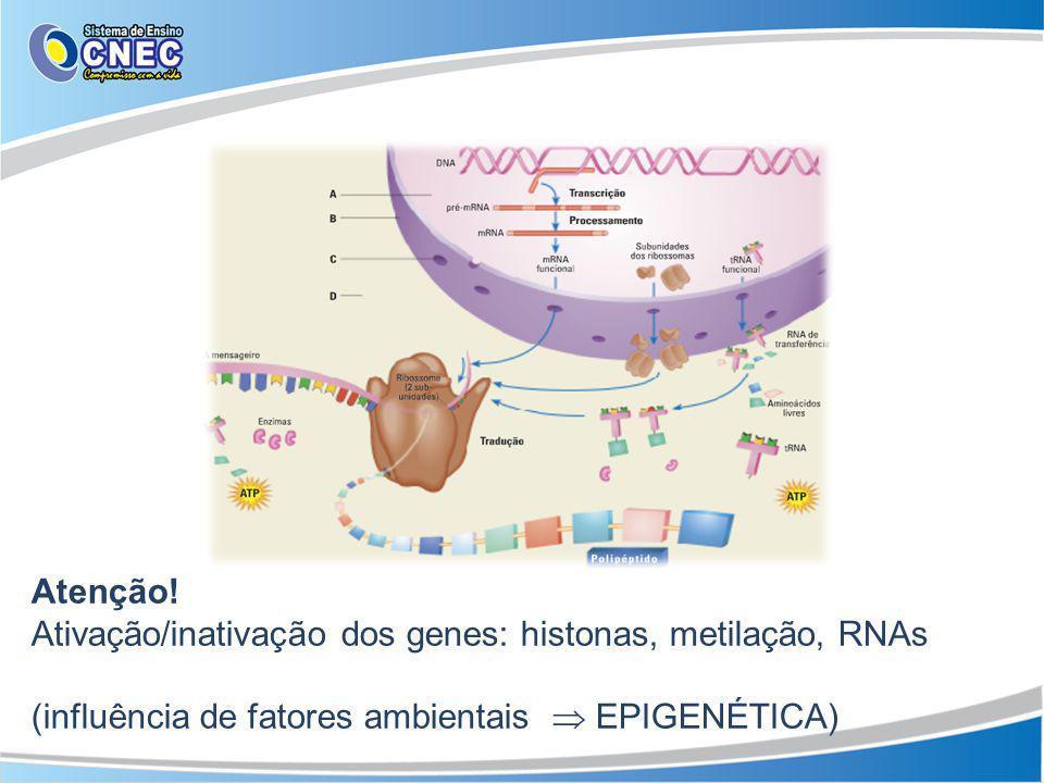 Atenção. Ativação/inativação dos genes: histonas, metilação, RNAs.