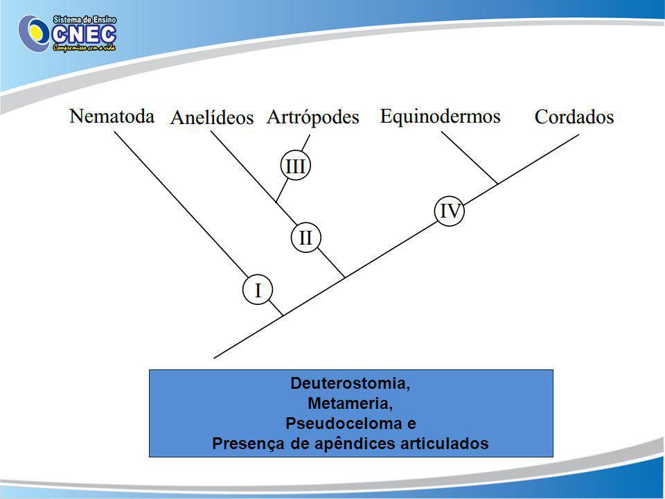 Presença de apêndices articulados