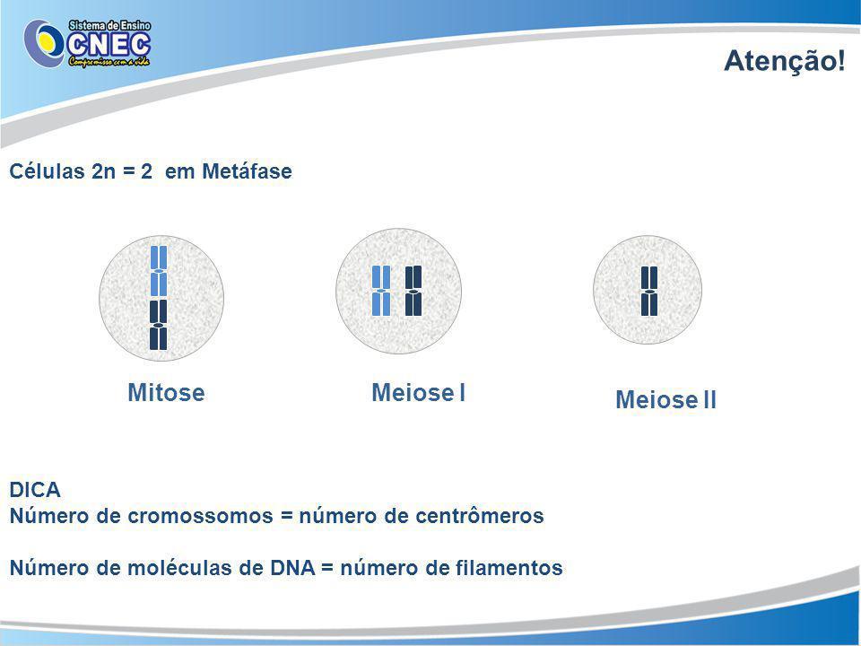 Atenção! Mitose Meiose I Meiose II Células 2n = 2 em Metáfase DICA