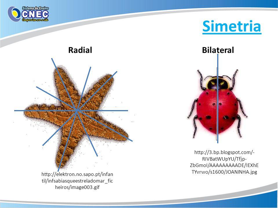 Simetria Radial Bilateral