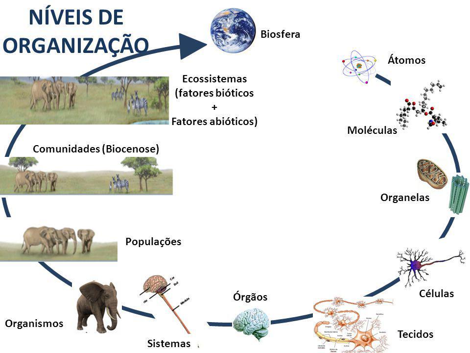 Comunidades (Biocenose)