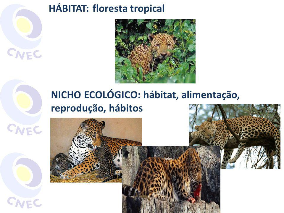 HÁBITAT: floresta tropical