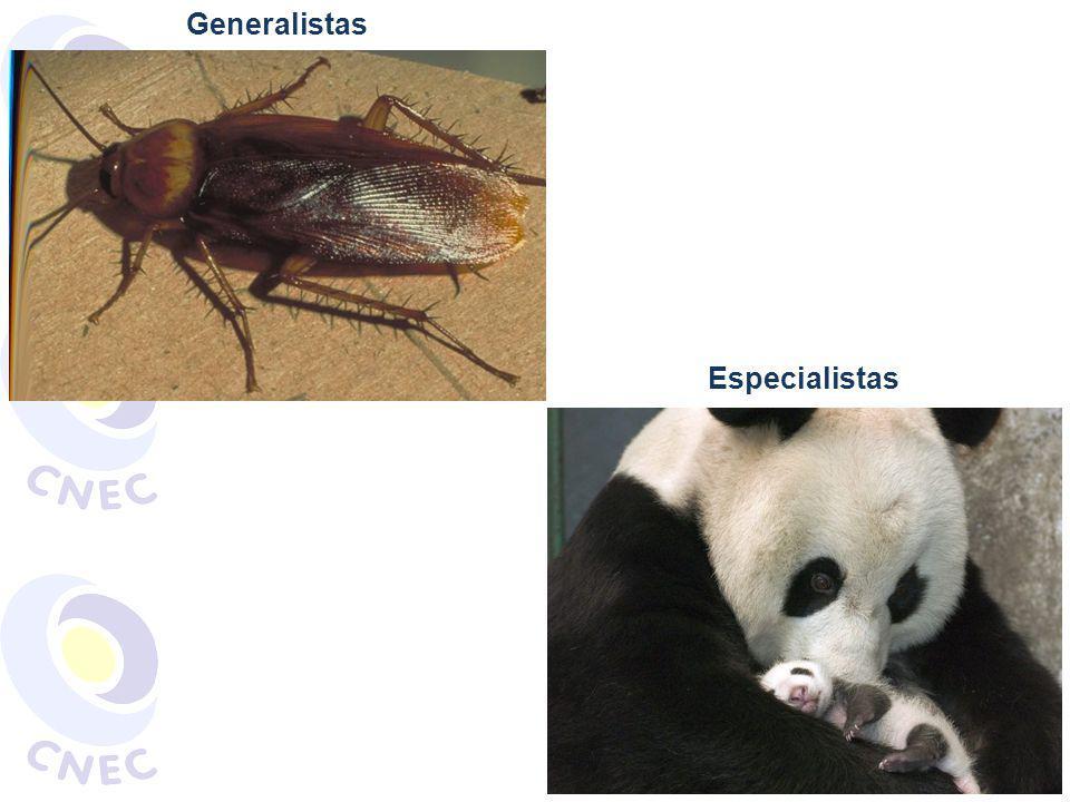 Generalistas Especialistas