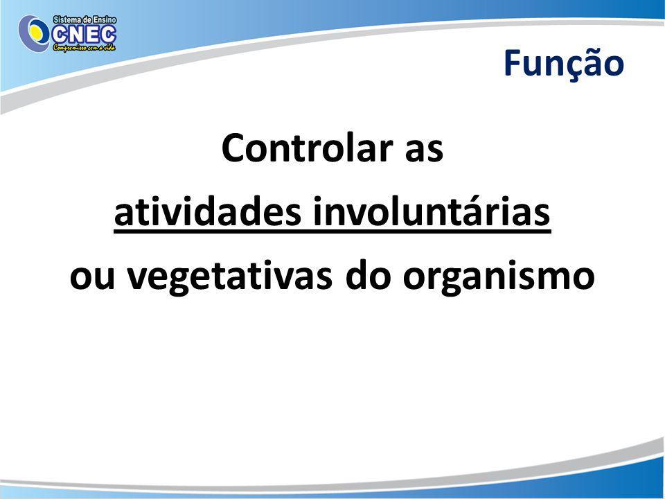 Controlar as atividades involuntárias ou vegetativas do organismo