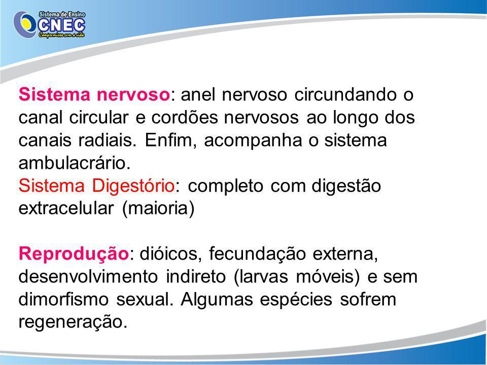 Sistema nervoso: anel nervoso circundando o canal circular e cordões nervosos ao longo dos canais radiais. Enfim, acompanha o sistema ambulacrário.