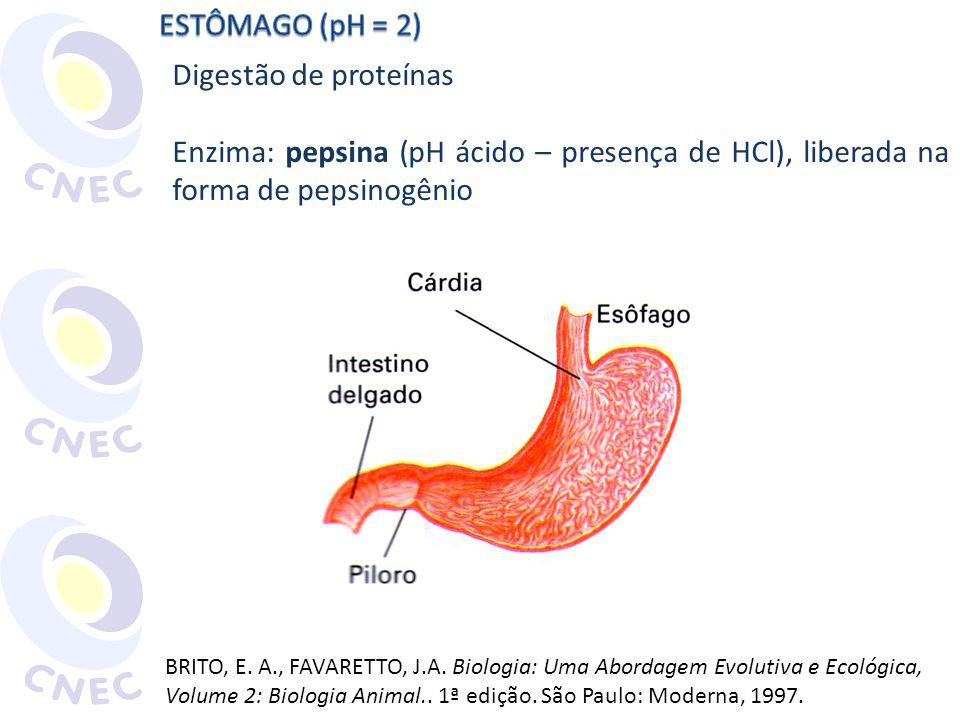 ESTÔMAGO (pH = 2) Digestão de proteínas