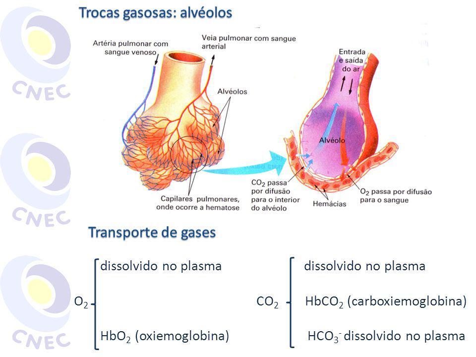 Trocas gasosas: alvéolos