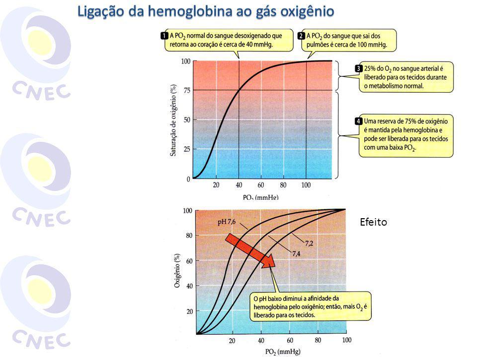 Ligação da hemoglobina ao gás oxigênio