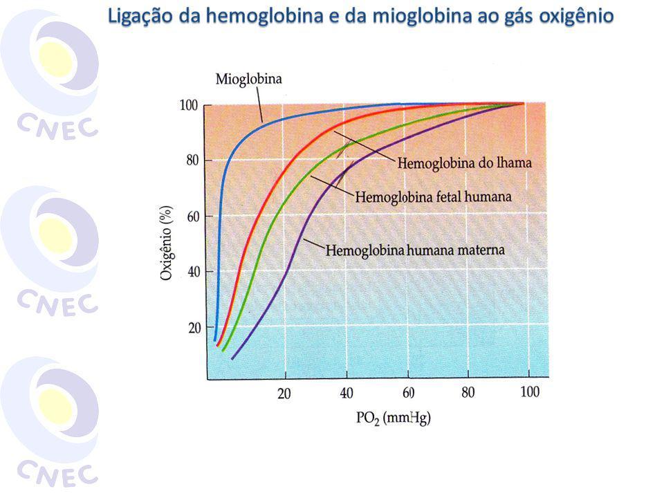 Ligação da hemoglobina e da mioglobina ao gás oxigênio