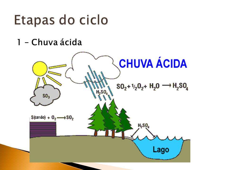 Etapas do ciclo 1 – Chuva ácida