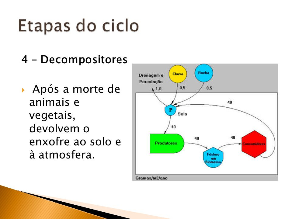 Etapas do ciclo 4 – Decompositores