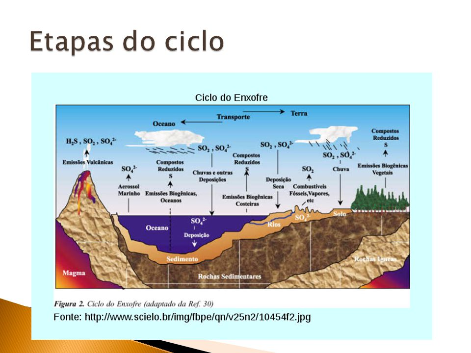 Etapas do ciclo