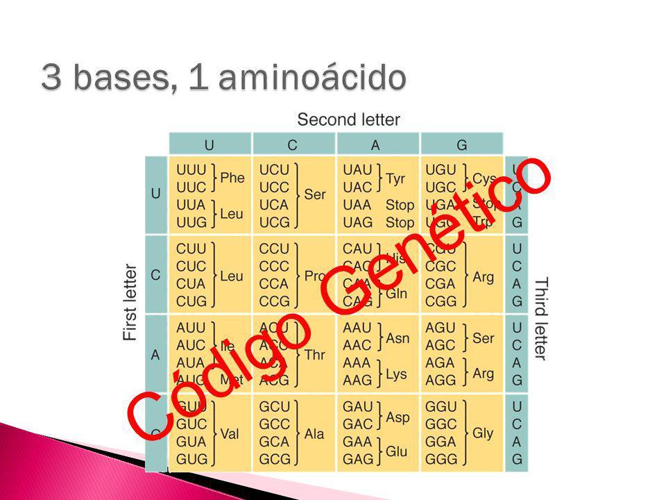 3 bases, 1 aminoácido Código Genético