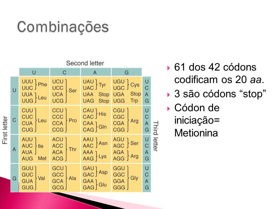 Combinações 61 dos 42 códons codificam os 20 aa. 3 são códons stop