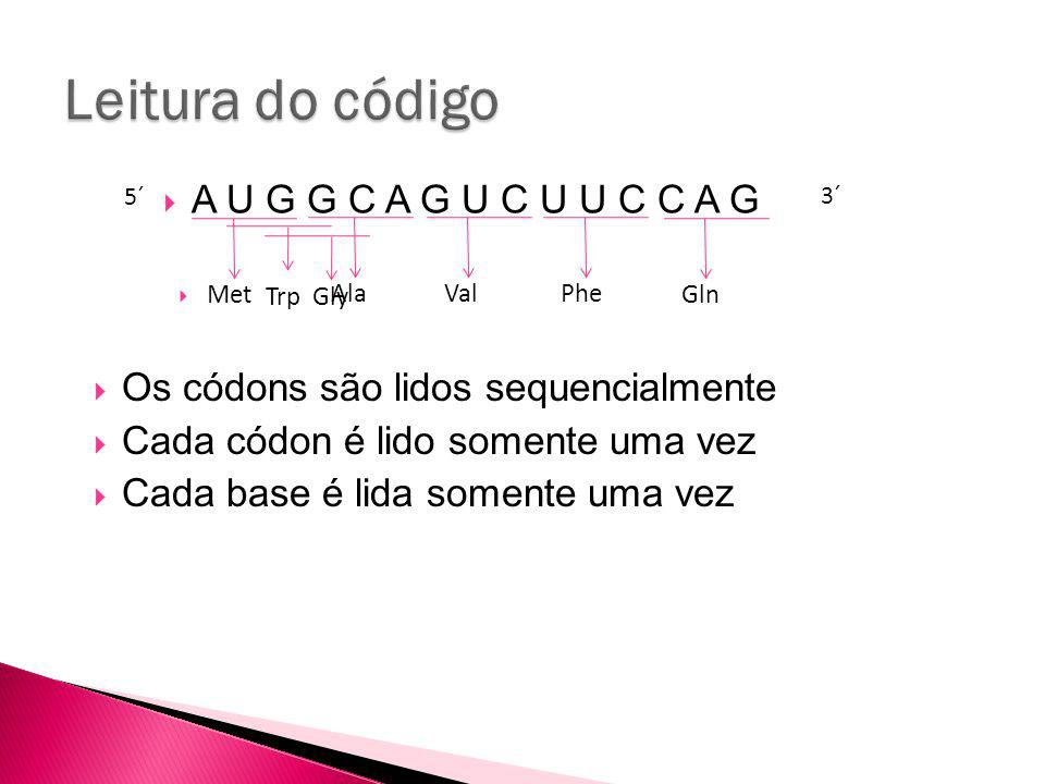 Leitura do código A U G G C A G U C U U C C A G