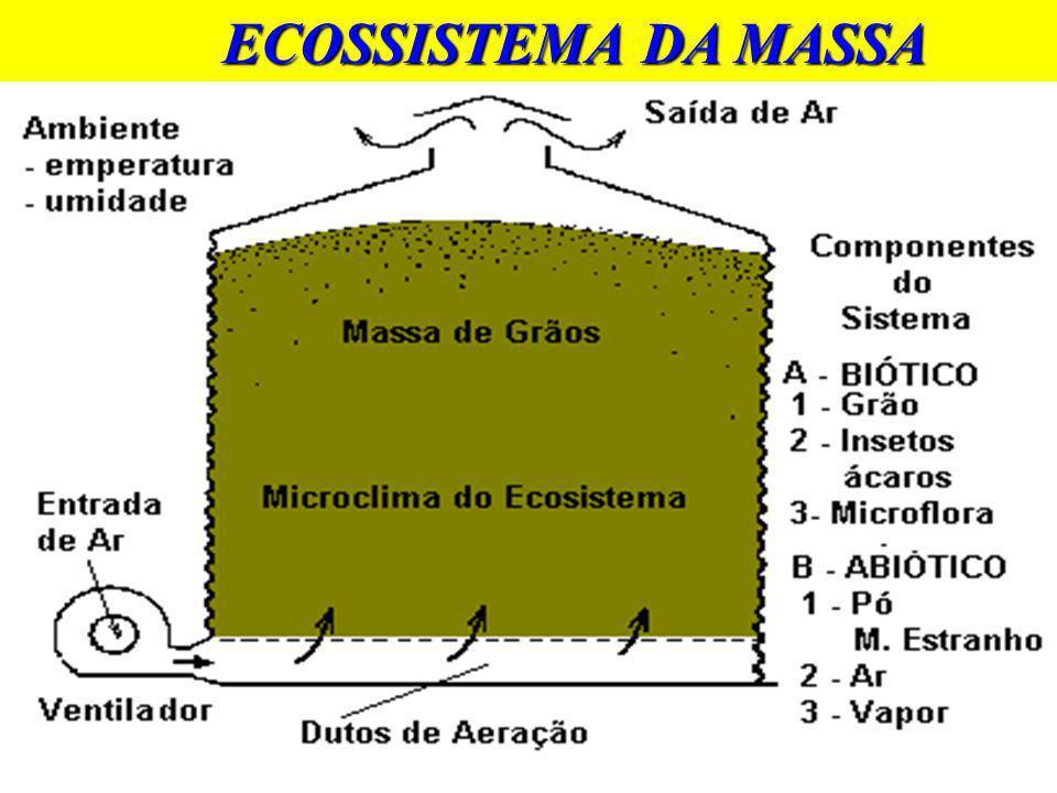 ECOSSISTEMA DA MASSA