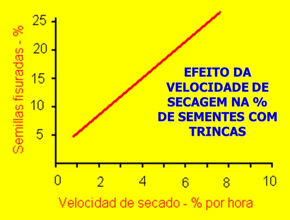 EFEITO DA VELOCIDADE DE SECAGEM NA % DE SEMENTES COM TRINCAS