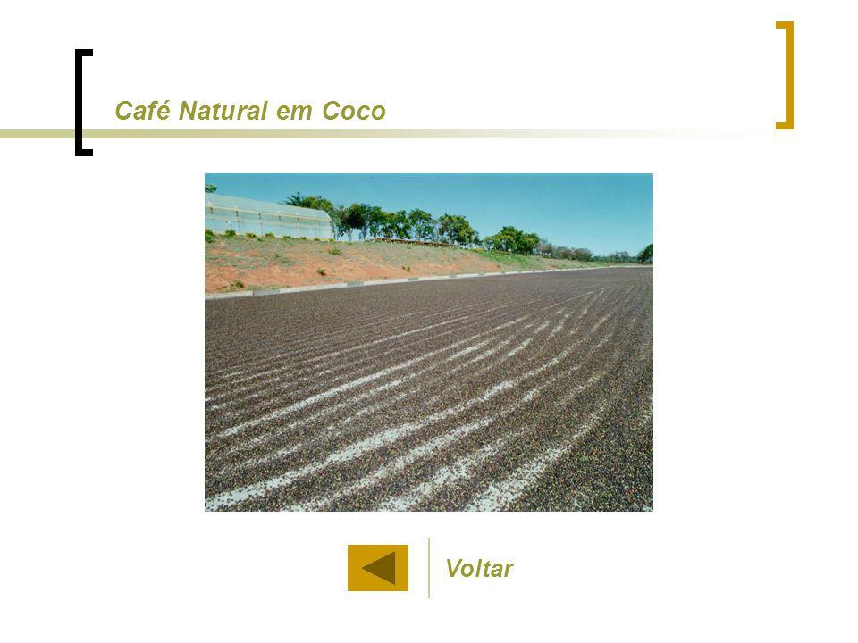 Café Natural em Coco Voltar