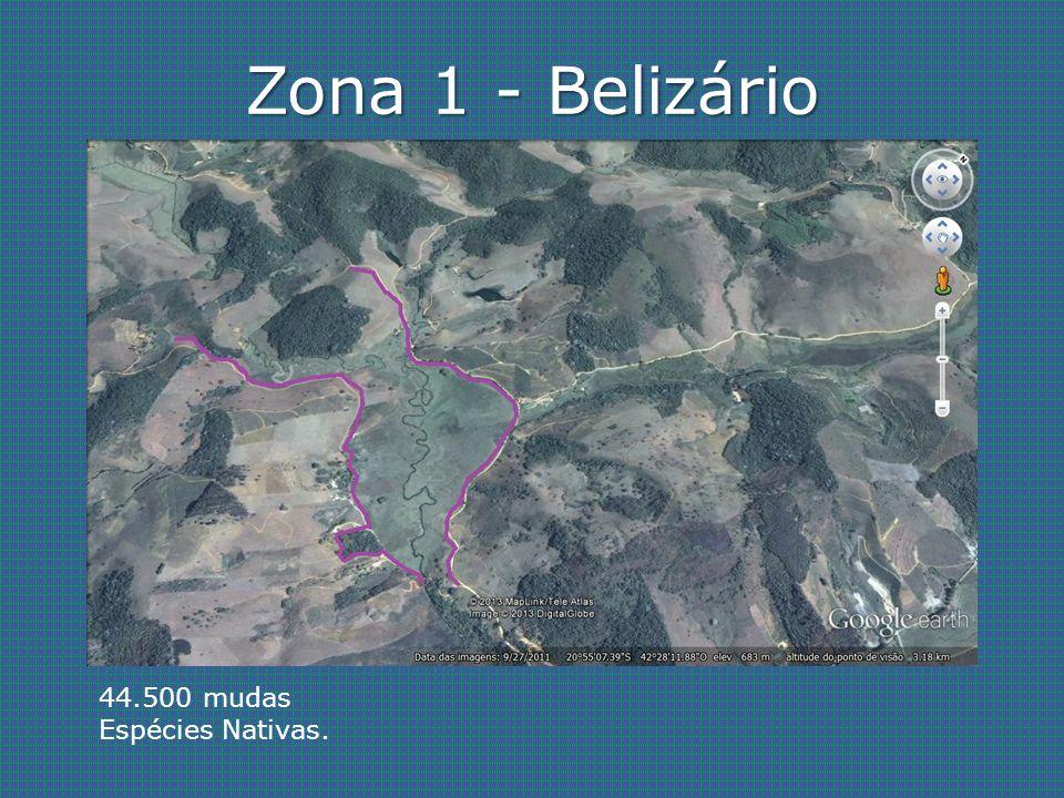 Zona 1 - Belizário 44.500 mudas Espécies Nativas.