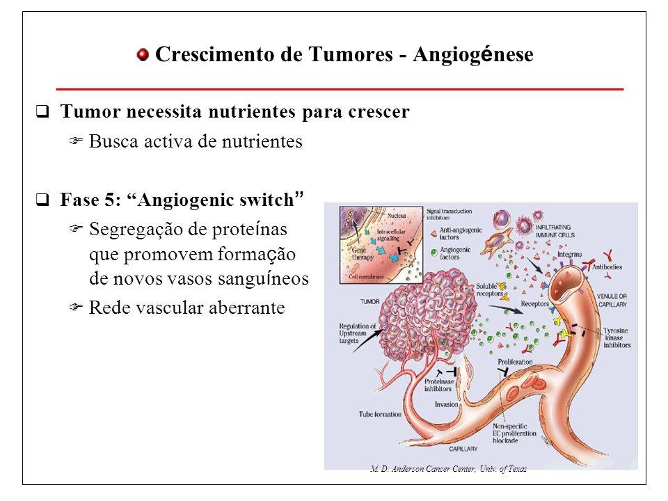 Crescimento de Tumores - Angiogénese