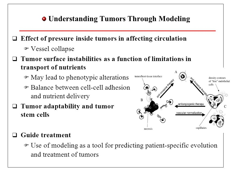 Understanding Tumors Through Modeling