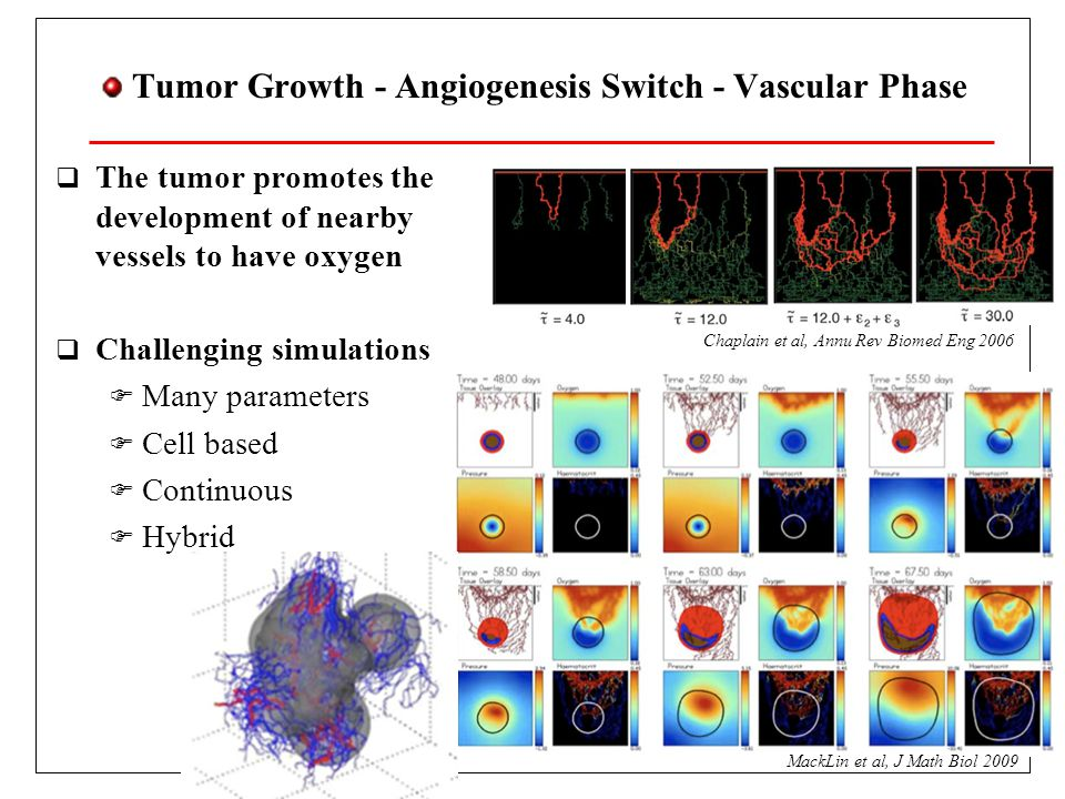 Tumor Growth - Angiogenesis Switch - Vascular Phase