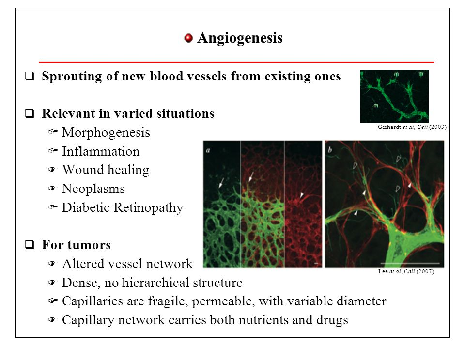 Angiogenesis Sprouting of new blood vessels from existing ones