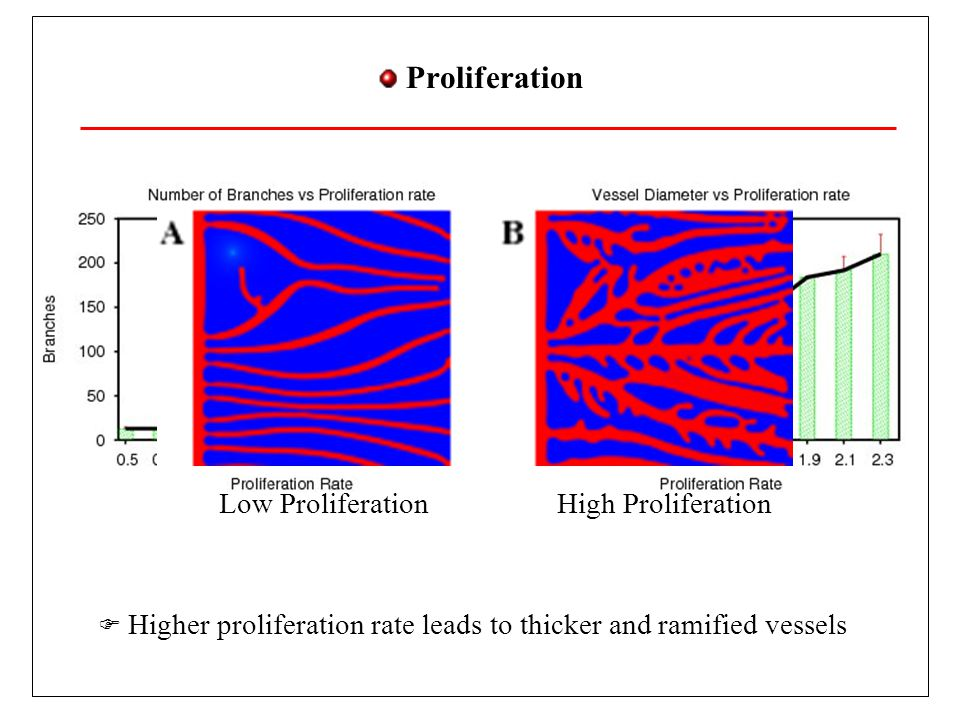 Proliferation Higher proliferation rate leads to thicker and ramified vessels.